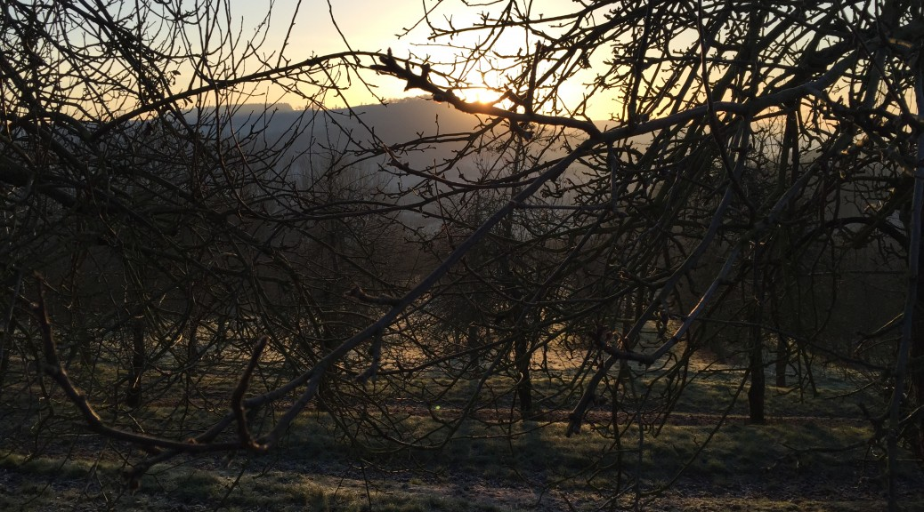 view from orchard of the sun rising over the hill