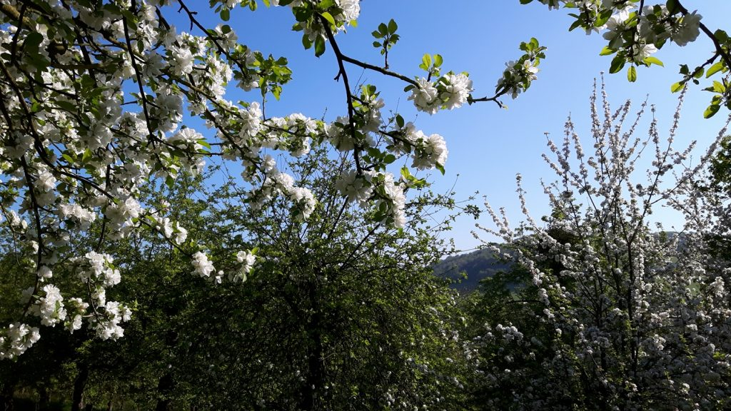 View through blossom across the Monnow Valley