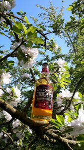 Apple County Cider Co. bottle in the blossom tree.