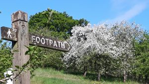 Footpath sign pointing to tree in blossom.
