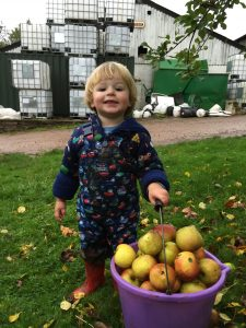Francis proudly helping collect apples last autumn