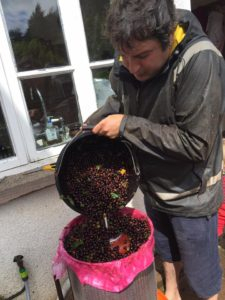 loading the press with chuckleberries