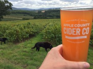 still cider dogs