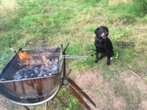 BBQ and dog